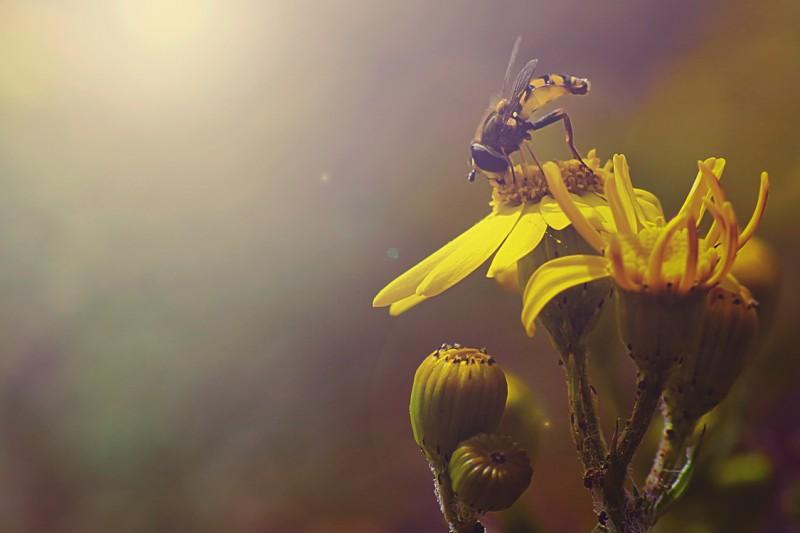 böcekler